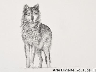 Cómo dibujar un lobo a lápiz - Narrado