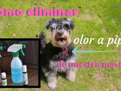 Ambientador casero para controlar el olor a mascota