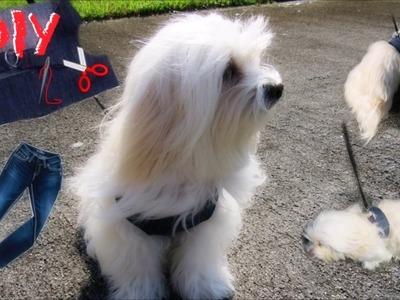DIY Arnes para Perros de un JEAN viejo FACIL, RECICLAJE I lorentix
