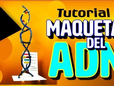 MAQUETA DEL ADN | Tutorial paso a paso