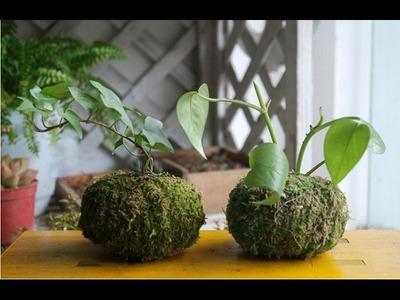 REVIEW de maceta con musgo artificial para oficina o interior de casa muy economica