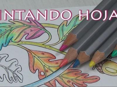 ASMR español   Coloreando a lápiz brujas de Mundodisco