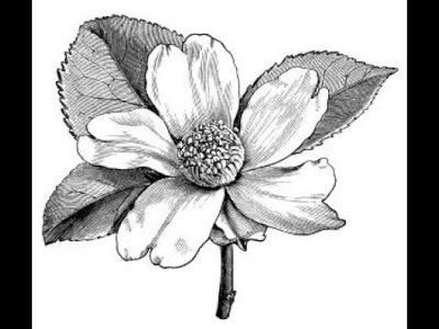 Dibujos de Flores   -*** Ideas para tu tatuaje ***