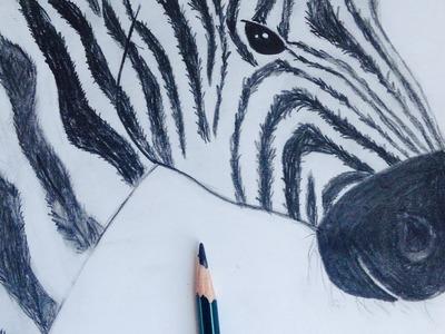 Speed drawing Como dibujar una cebra realista