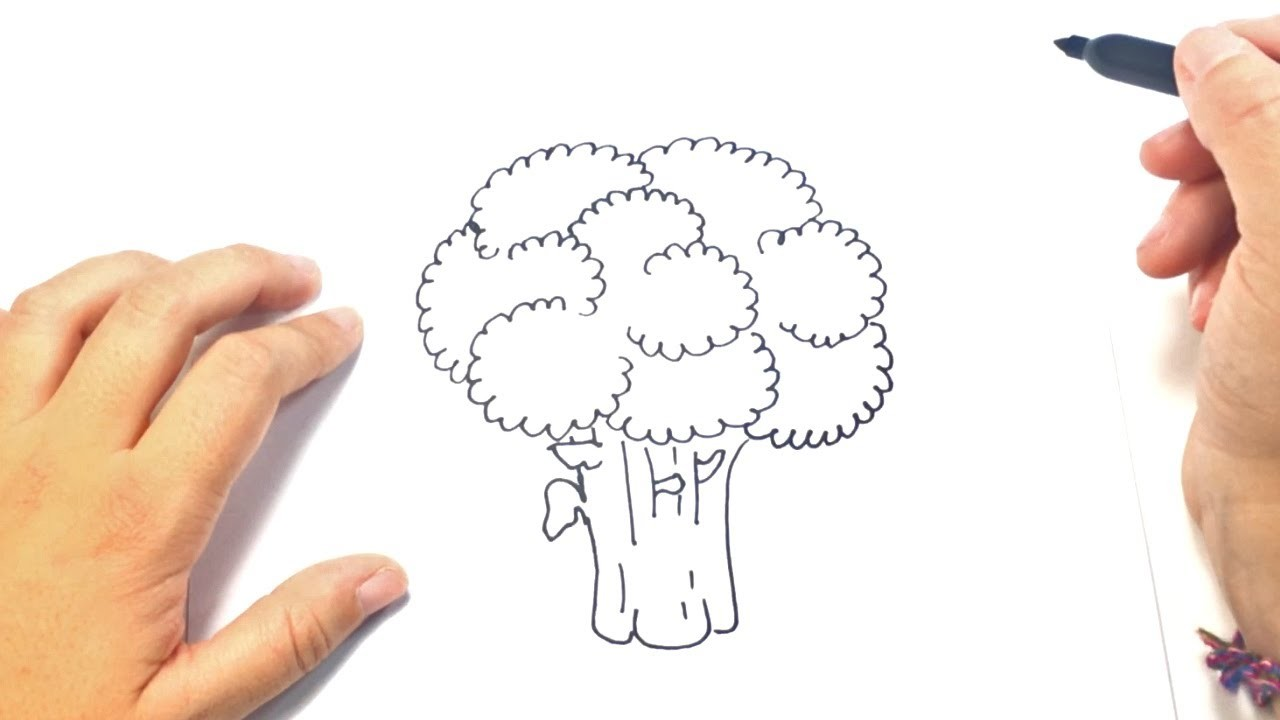 Como dibujar un Brocoli para niños | Dibujo de Brocoli paso a paso
