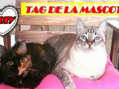 EL TAG DE LA MASCOTA Y 3 DIY FACILES PARA GATOS.