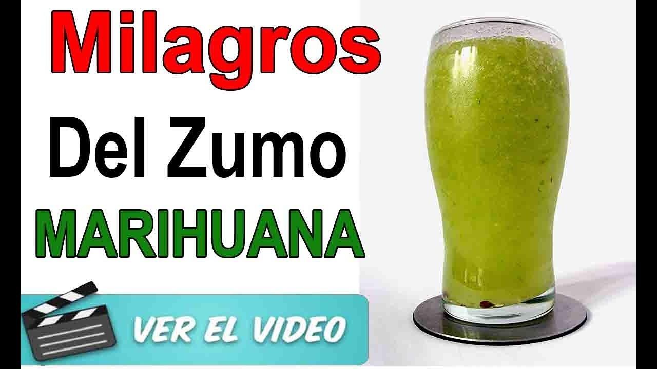 El Zumo De Hojas De Marihuana Espectacular Para La Salud ¡Mira Los Beneficios Que Tiene Esta Planta!