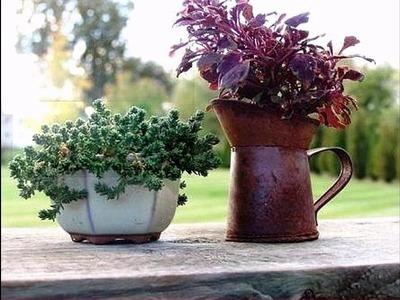 Ideas de diseño de plantador de jardín