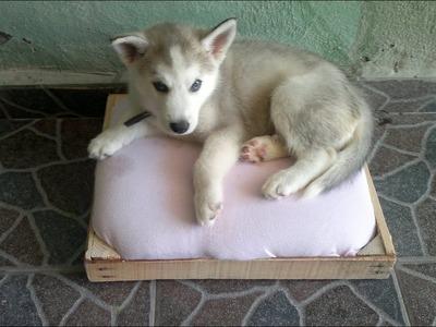 Como hacer una cama para perros tutorial