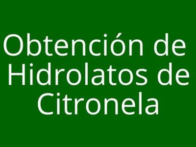 Obtención de Hidrolatos de Citronela (método casero)