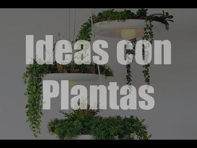 Ideas con plantas, como decorar con plantas