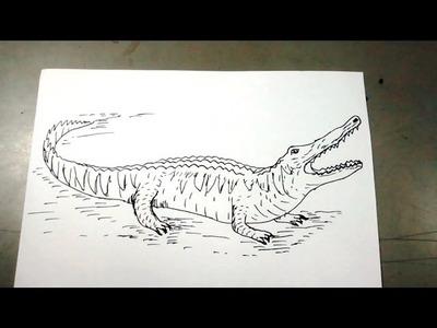 Cómo dibujar un cocodrilo paso a paso