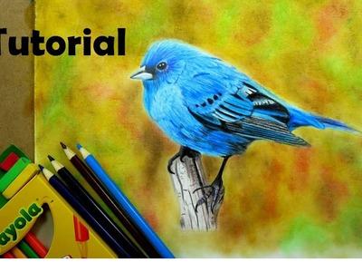 Cómo dibujar un pájaro  - Lápices de colores escolares - How to draw a blue bird