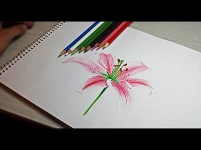 Cómo dibujar una flor - Arte Orta