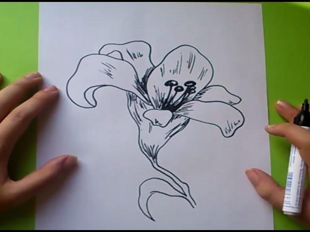Como dibujar una flor paso a paso 6   How to draw a flower 6
