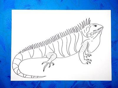Cómo dibujar una iguana fácil paso a paso
