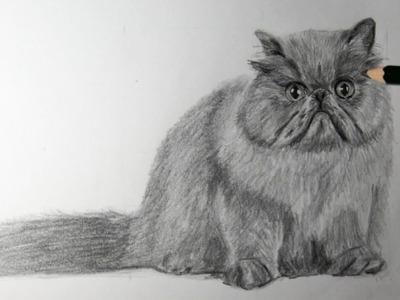 Dibujo de gato persa a lápiz