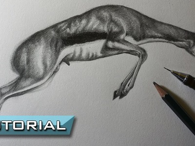 Cómo Dibujar una Gacela saltando - Realista a Lápiz Paso a Paso - Tutorial de Dibujo