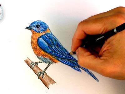 Como Dibujar un Pajaro Paso a Paso con Lapices de Colores
