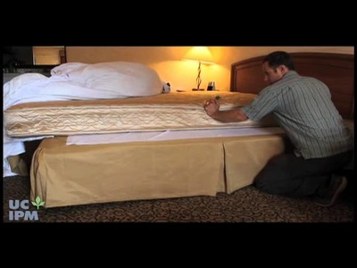 Cómo saber si tiene chinches de cama