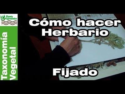 Cómo hacer un herbario - 3-5 - Fijado de la planta en cartón