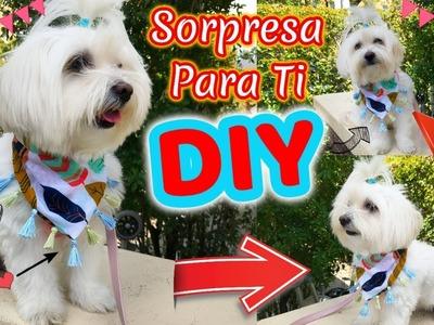 DIY Bandana de Mascota, Pañoleta, coton de tulear I Lorentix