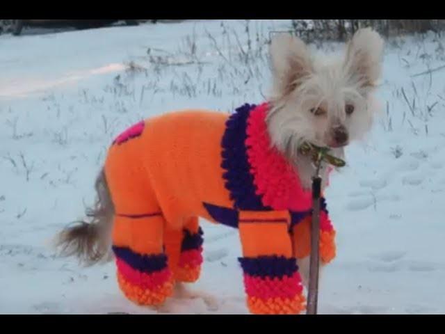Ropa a crochet para mascotas de raza pequeña