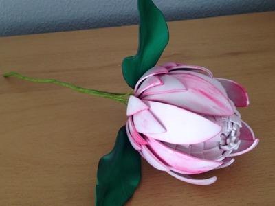 Flor de la protea  Flower of Protea
