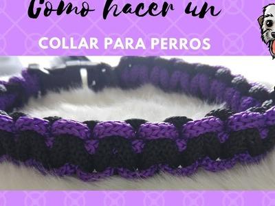 DIY Como hacer un collar para perro casero, ACCESORIOS PARA TU MASCOTA
