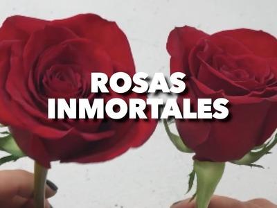 HAZ ROSAS INMORTALES