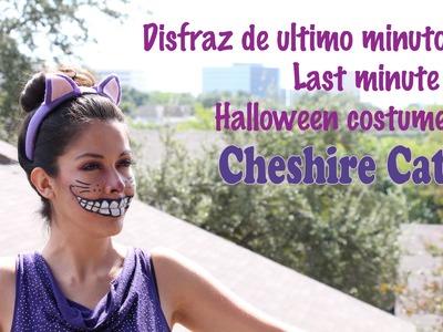 Last minute halloween costume, dizfras de ultimo minuto, Cheshire cat