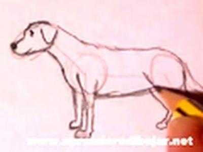 Dibujo de un perro a lápiz - Cómo dibujar animales