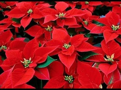 Hecho En Casa: Flor De Navidad (Goma Eva, Foami)