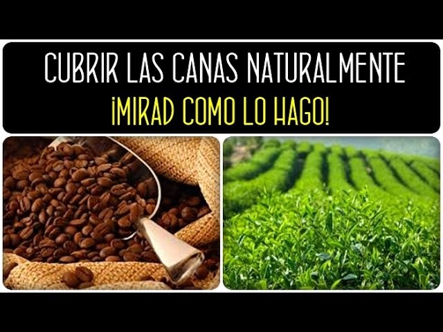 Cómo cubrir las canas en casa de forma natural. How to remove gray hair naturally