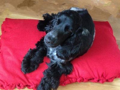 Cómo hacer cama para mascotas, sin coser