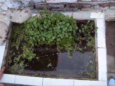 Como hacer un estanque? (En recipiente)