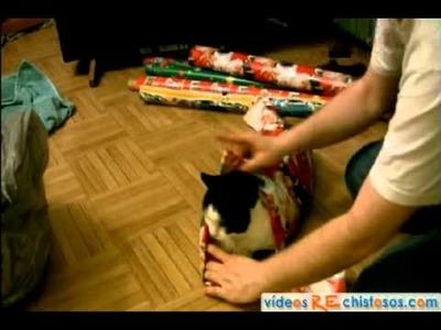 Cómo envolver a un gato como regalo de Navidad
