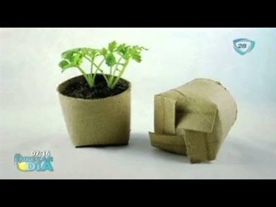 Macetas hechas con rollos de papel higiénico