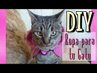 DIY Ropa para Gato