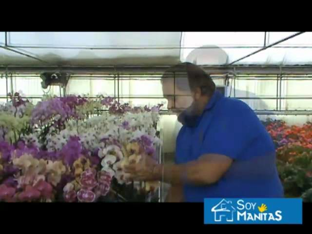 Cómo cuidar las orquídeas