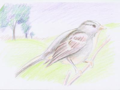 Dibujo Artistico para niños: como dibujar un pajaro con Lápices de Colores