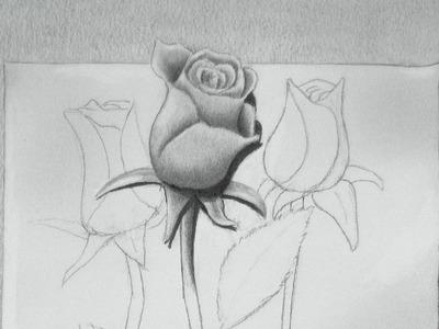 Dibujando rosas: cómo dibujar una rosa en 3D - Arte Divierte