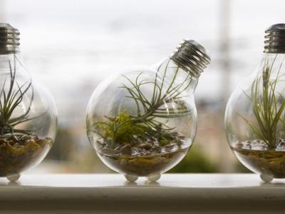 1000 Ideas originales para el reciclaje de bombillas tradicionales