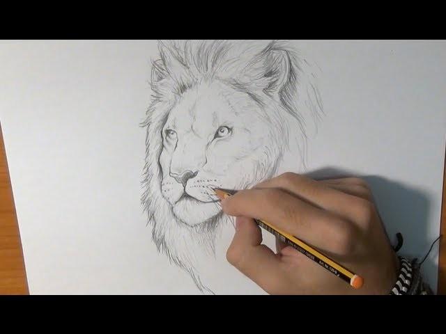 Dibujar un león real