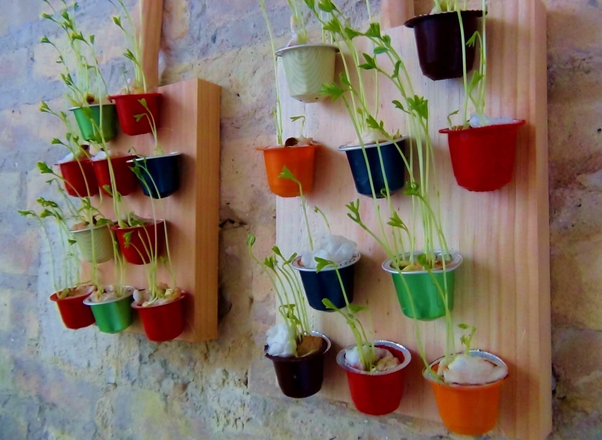 Jardín vertical con cápsulas de café How to make a decorative mini wall garden with lentils