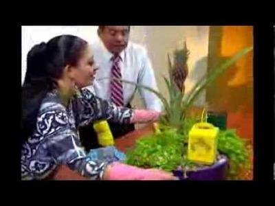 Cómo hacer Jardines para Generar Abundancia (AV)