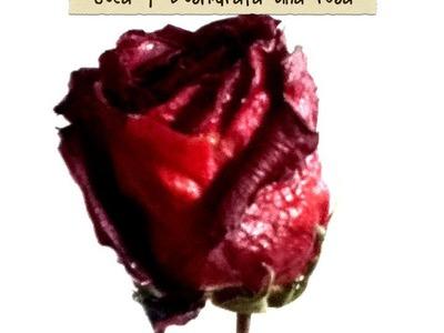 DIY seca deshidrata y conserva tu rosa natural dehydrated and dry natural roses