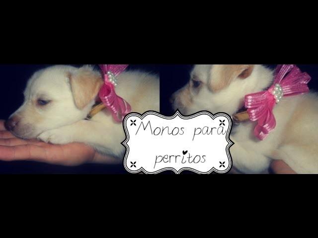 Crea Hermoso Moño para tu perrito ! DIY doggie bows