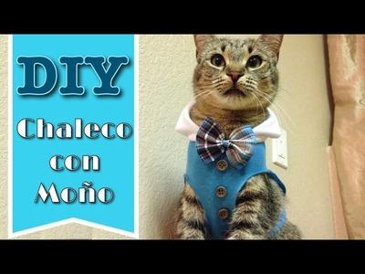 DIY Chaleco con Moño para Gatos