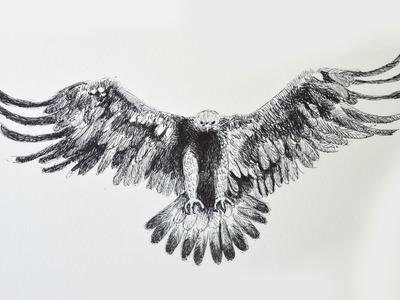 Cómo dibujar un águila con bolígrafo - Arte Divierte.